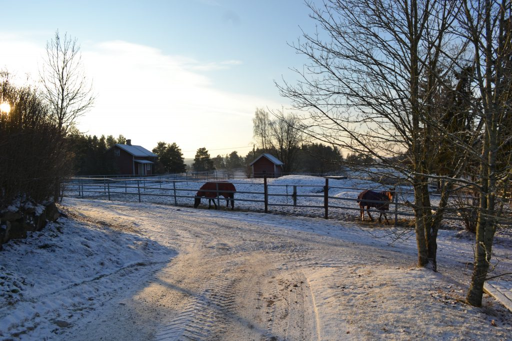 Hevosia pihatarhassa